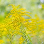 How to Cope With Allergies And Get Relief