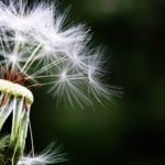 Want To Know How To Deal With Allergies? Keep Reading